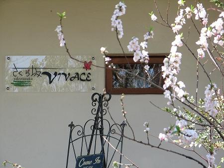 sakurazaka-vivace (30)