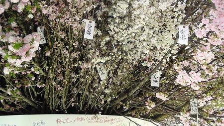 『桜を見上げよう』Sakura Project