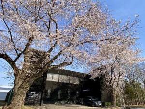 20210327谷田部珈琲満開の桜